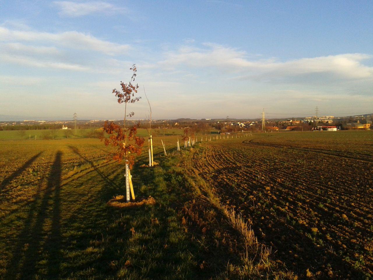 stromy_cesta_1512_01