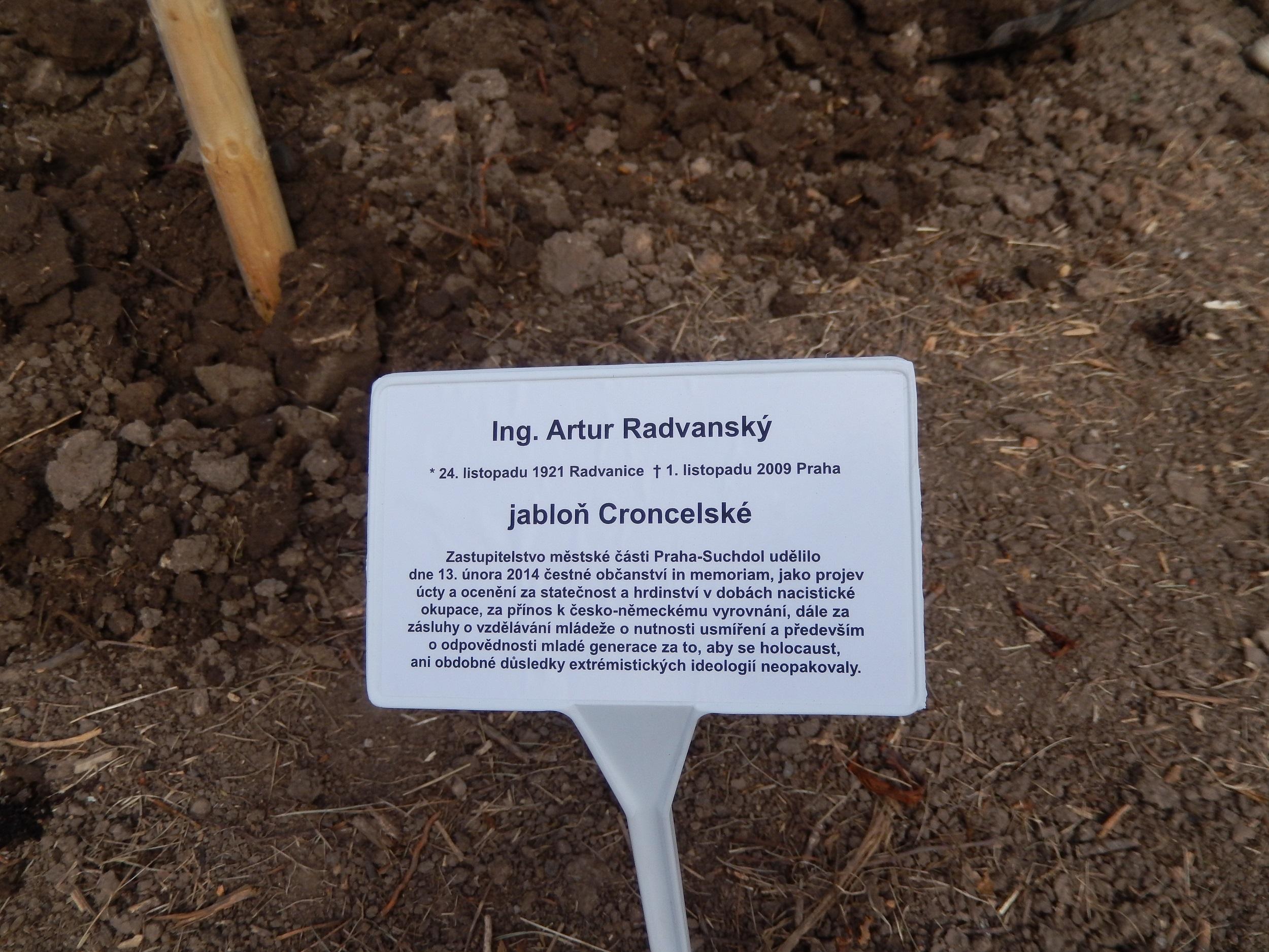 Cedulka ke stromu A. Radvanského  -Sázení stromů čestným občanům