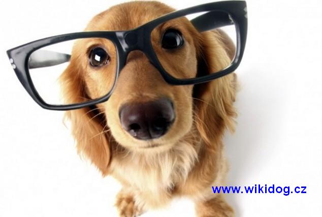 pes wikidog.cz