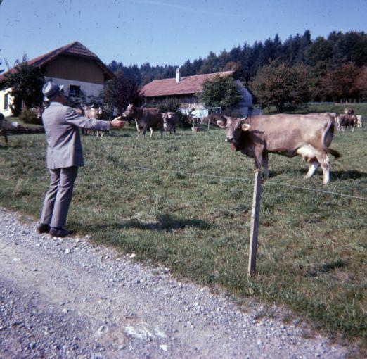 Pitter mluví česky s kravičkou